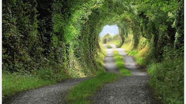 你的道路是什么