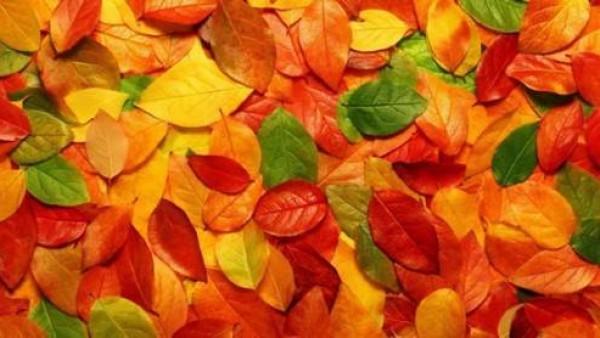 14个七彩秋季桌面壁纸下载
