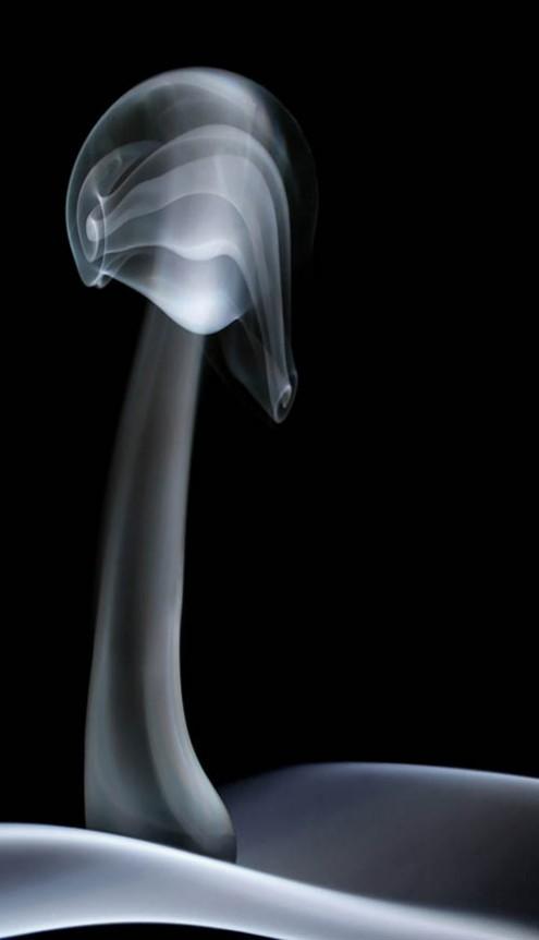 magic-mushroom1